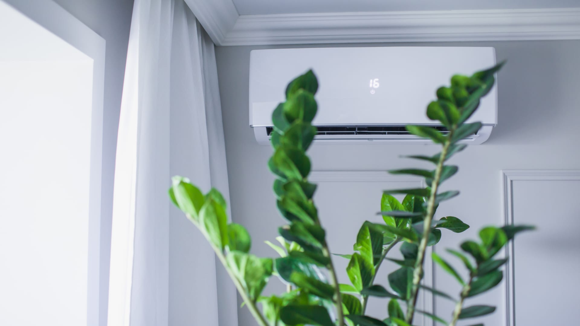plants improving indoor air quality
