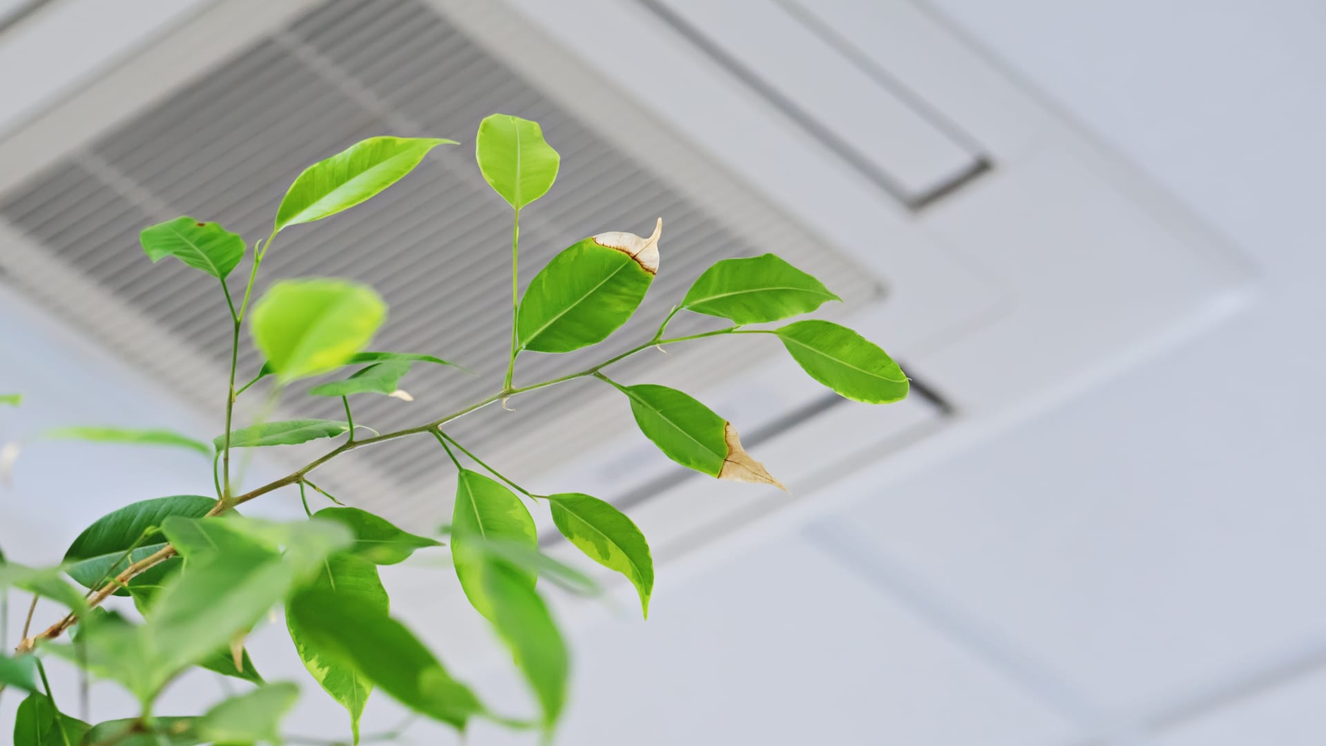 a plant in front of an air vent